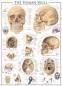 Пазл Человеческий череп 1000 эл - 1