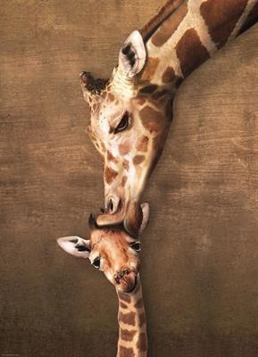 Пазл Жирафы поцелуй матери 1000 эл - 1