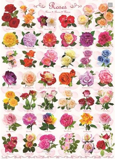 Пазл Розы 1000 эл - 1