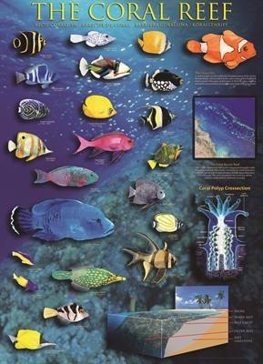 Пазл Коралловый риф 1000 эл - 1