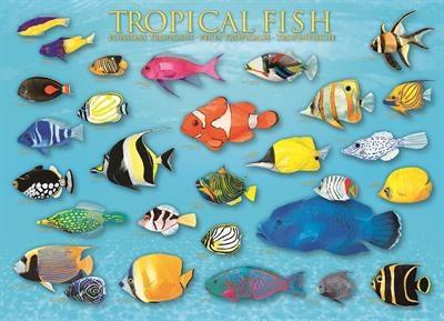 Пазл Тропические рыбы 1000 эл - 1